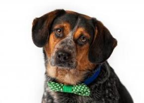 Orson Wells - 5 yrs old - available for adoption