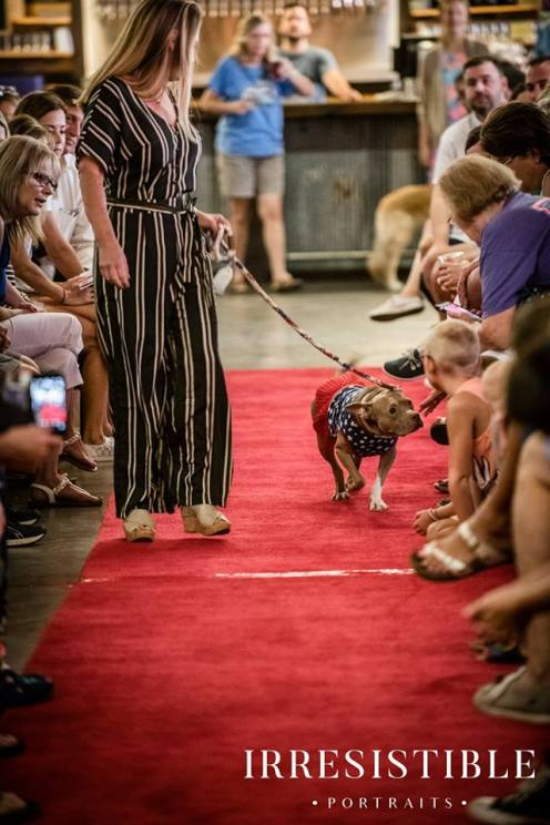 bark-and-brew-2018-red-carpet13