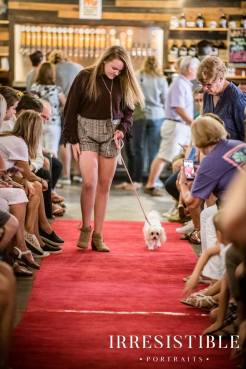 bark-and-brew-2018-red-carpet15