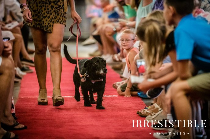 bark-and-brew-2018-red-carpet2
