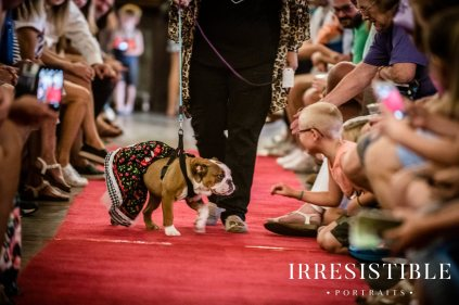 bark-and-brew-2018-red-carpet5