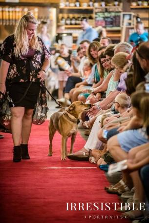 bark-and-brew-2018-red-carpet7
